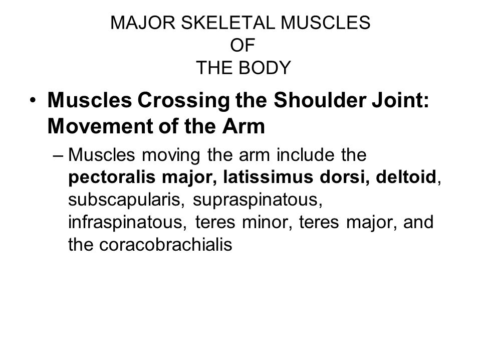MAJOR SKELETAL MUSCLES OF THE BODY Muscles Crossing the Shoulder Joint: Movement of the Arm –Muscles moving the arm include the pectoralis major, lati