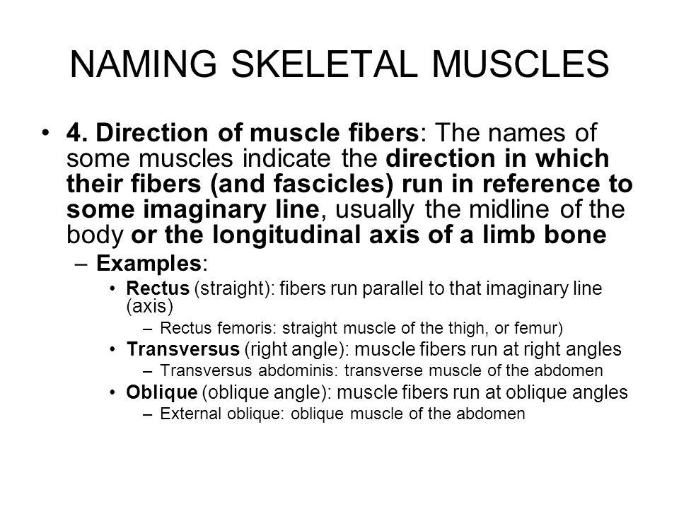 NAMING SKELETAL MUSCLES 5.