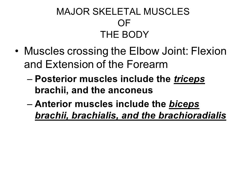 MAJOR SKELETAL MUSCLES OF THE BODY Muscles crossing the Elbow Joint: Flexion and Extension of the Forearm –Posterior muscles include the triceps brach