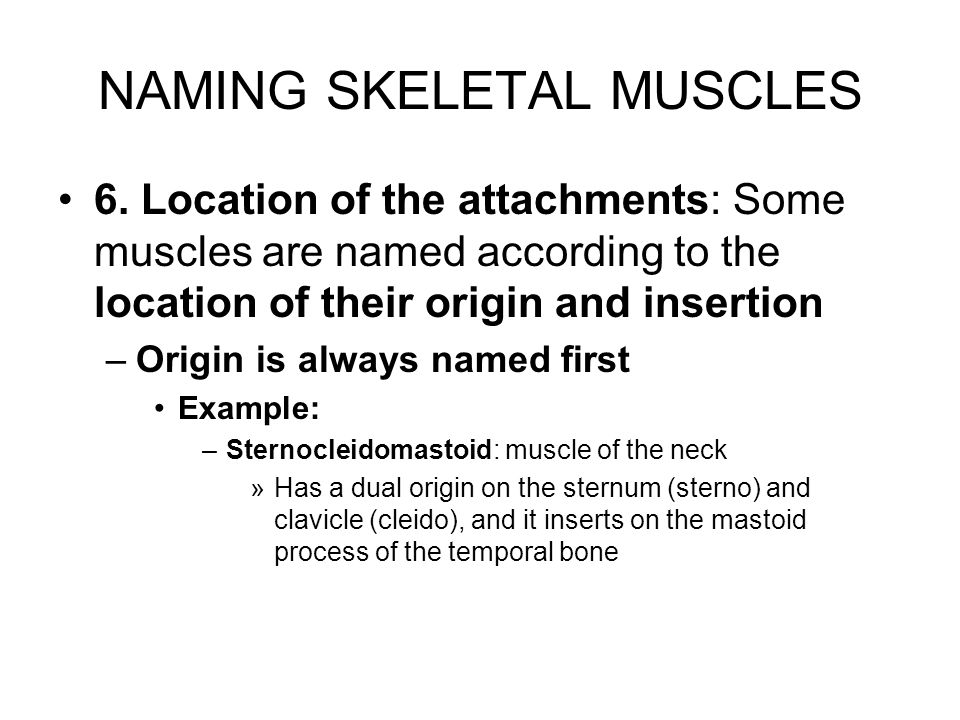 Thorax Muscles Deltoid: cervical nerves: –Prime mover of arm abduction –Antagonists of pectoralis major and latissimus dorsi Pectoralis major: cervical and thoracic nerves: –Prime mover of arm flexion –Adduction Trapezius: cervical nerves: –Stabilizes, raises, retracts, and rotates scapula Latissimus dorsi: cervical nerves –Prime mover of arm extension –Powerful arm adductor Striking a blow Swimming Rowing
