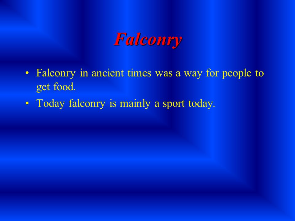 Falconry By David Selden-Treiman