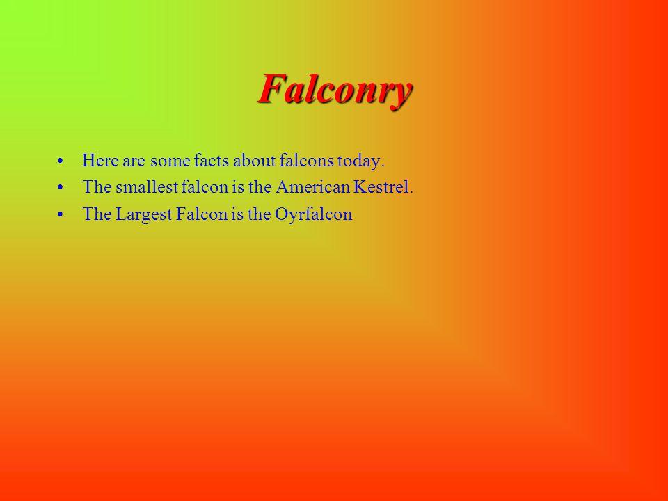 "Falconry SS ome types of falcons are: TT he American Kestrel9"" to 12""falco sparverius TT he Prairie Falcon12""falco mexicanus TT he Merlin Falc"