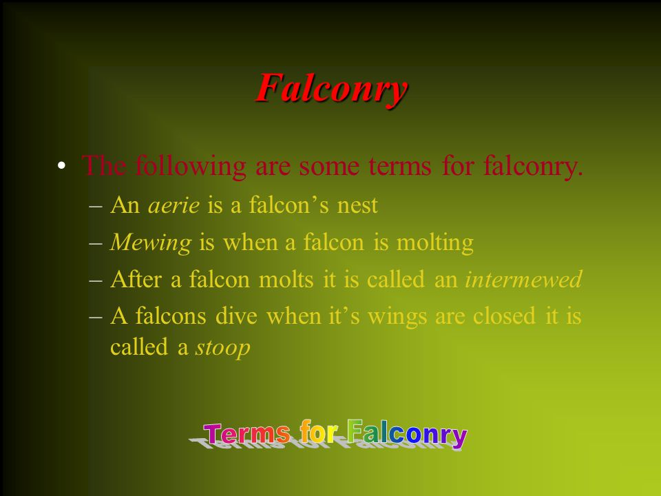 Falconry AA round the second half of the 9 th century falconry was popular in England. Falconry was used widely until the first half of the 17 th ce