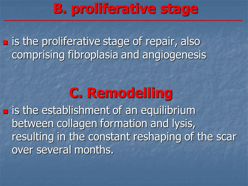 B. proliferative stage is the proliferative stage of repair, also comprising fibroplasia and angiogenesis is the proliferative stage of repair, also c