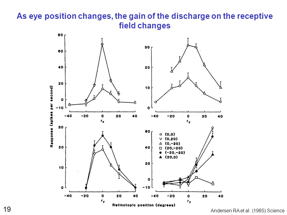19 As eye position changes, the gain of the discharge on the receptive field changes Andersen RA et al.