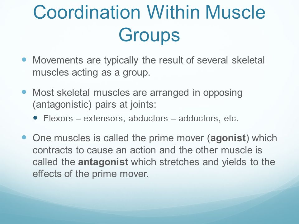 Coordination Within Muscle Groups Movements are typically the result of several skeletal muscles acting as a group. Most skeletal muscles are arranged