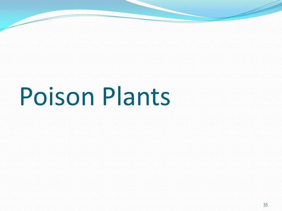 35 Poison Plants