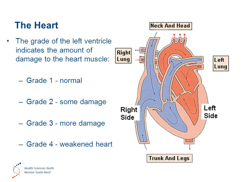 6 The grade of the left ventricle indicates the amount of damage to the heart muscle: –Grade 1 - normal –Grade 2 - some damage –Grade 3 - more damage –Grade 4 - weakened heart The Heart