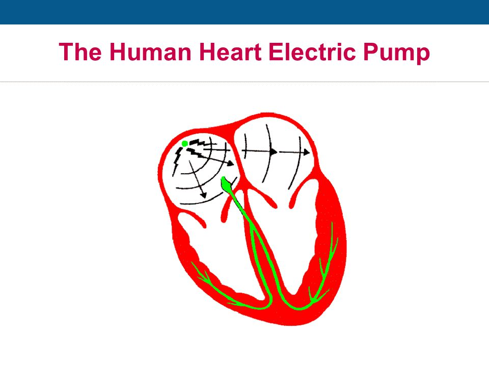 The Human Heart Electric Pump