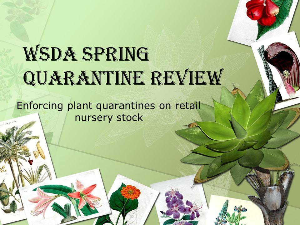 Box Stores and retail nurseries bringing in stock from other states –Did they send notification of incoming stock.