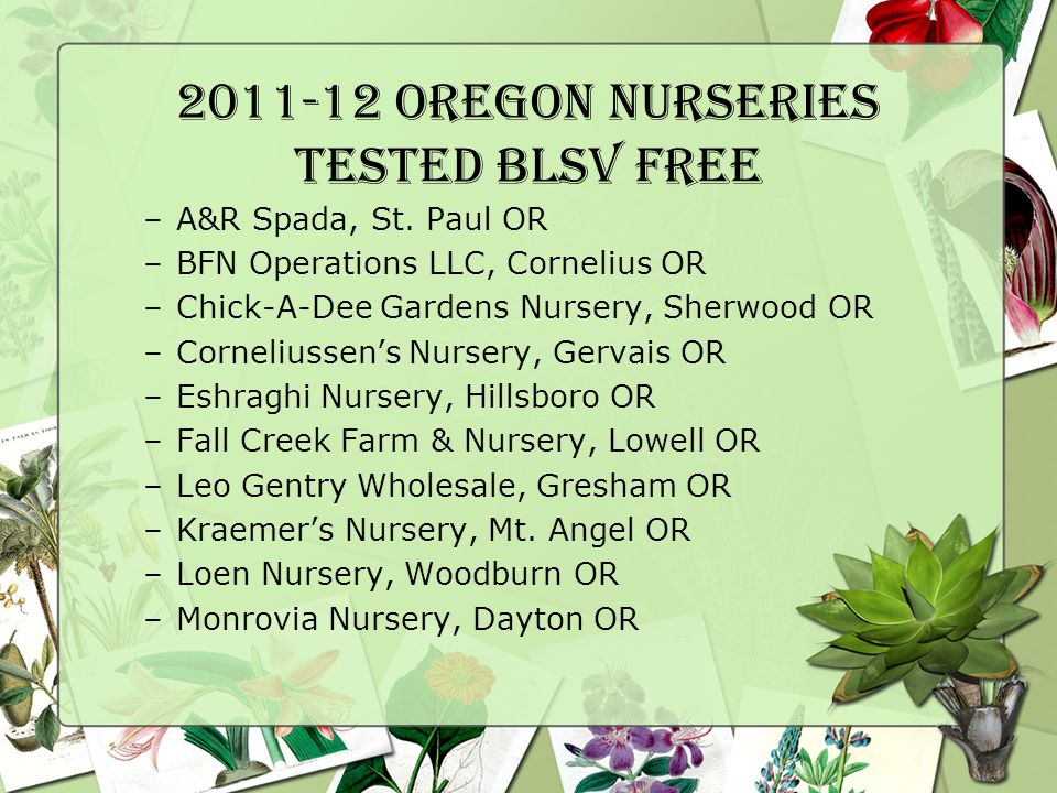 2011-12 OREGON Nurseries Tested BlSV Free –A&R Spada, St.