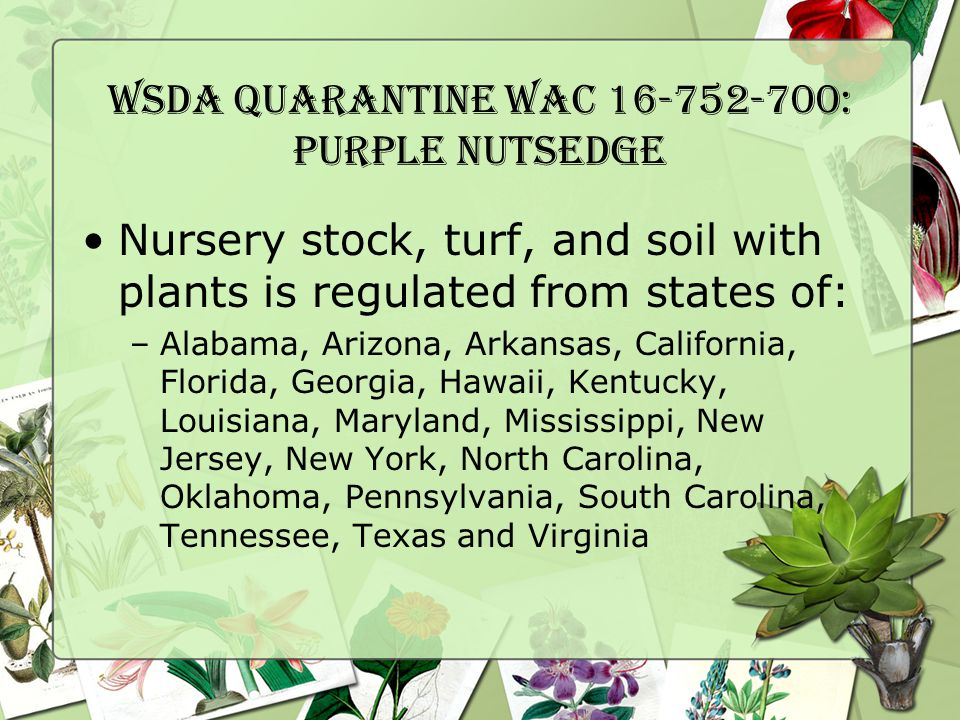WSDA Quarantine WAC 16-752-700: Purple Nutsedge Nursery stock, turf, and soil with plants is regulated from states of: –Alabama, Arizona, Arkansas, California, Florida, Georgia, Hawaii, Kentucky, Louisiana, Maryland, Mississippi, New Jersey, New York, North Carolina, Oklahoma, Pennsylvania, South Carolina, Tennessee, Texas and Virginia