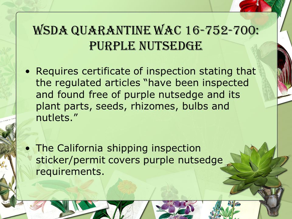 WSDA Quarantine WAC 16-752-700: Purple Nutsedge Requires certificate of inspection stating that the regulated articles have been inspected and found free of purple nutsedge and its plant parts, seeds, rhizomes, bulbs and nutlets. The California shipping inspection sticker/permit covers purple nutsedge requirements.