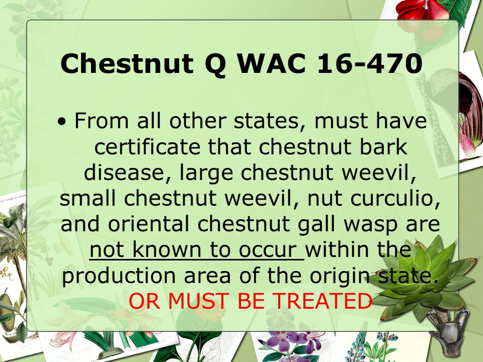 Chestnut Q WAC 16-470 From all other states, must have certificate that chestnut bark disease, large chestnut weevil, small chestnut weevil, nut curculio, and oriental chestnut gall wasp are not known to occur within the production area of the origin state.