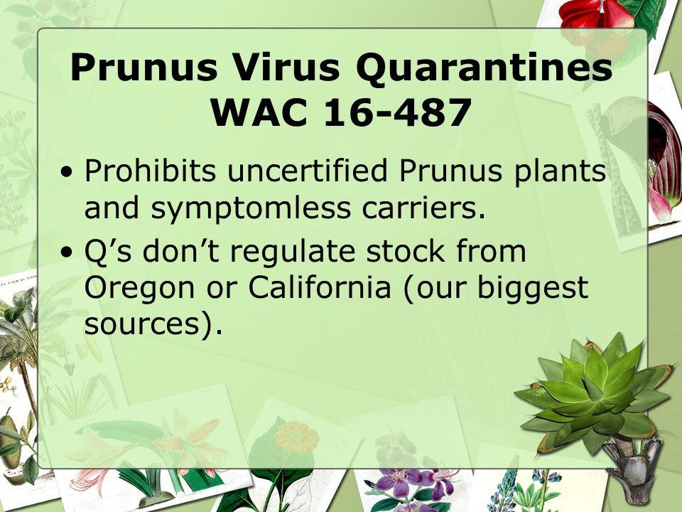 Prunus Virus Quarantines WAC 16-487 Prohibits uncertified Prunus plants and symptomless carriers.