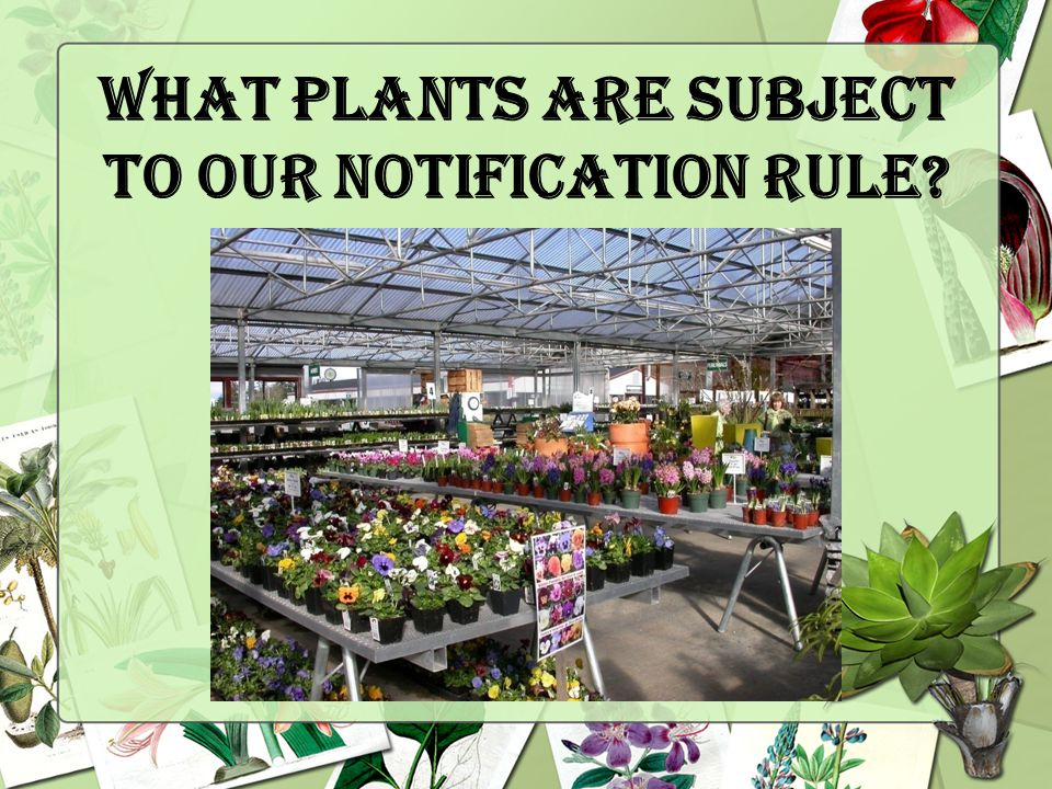 What plants are subject to our Notification Rule