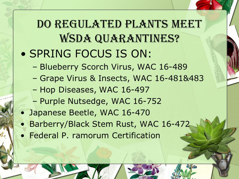 Do regulated Plants Meet WSDA Quarantines.
