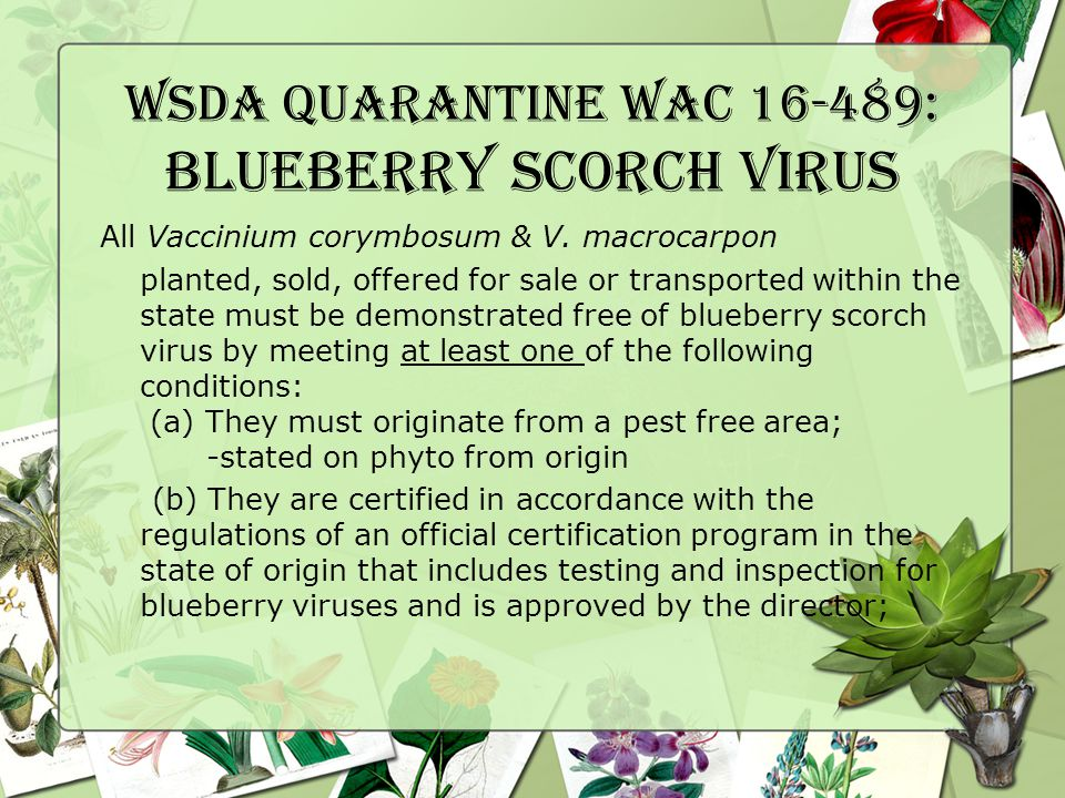 WSDA Quarantine WAC 16-489: Blueberry Scorch Virus All Vaccinium corymbosum & V.