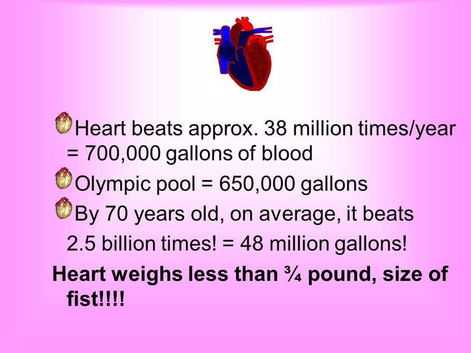 Size- Females 9.5 ounces, males 10.5 (men have larger bodies) The average adult beats 70 times/min Heart pumps roughly all blood- every minute Average human 5-6 quarts of blood.