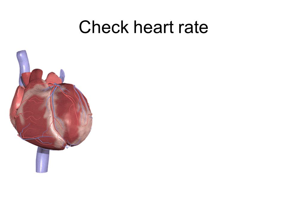 oHeartbeat starts right atrium in a small group of cells- nickname pacemaker oPacemaker contracts, send signals to left and right atrium, which then contracts oNext the right and left ventricle contracts oVentricles force blood out.