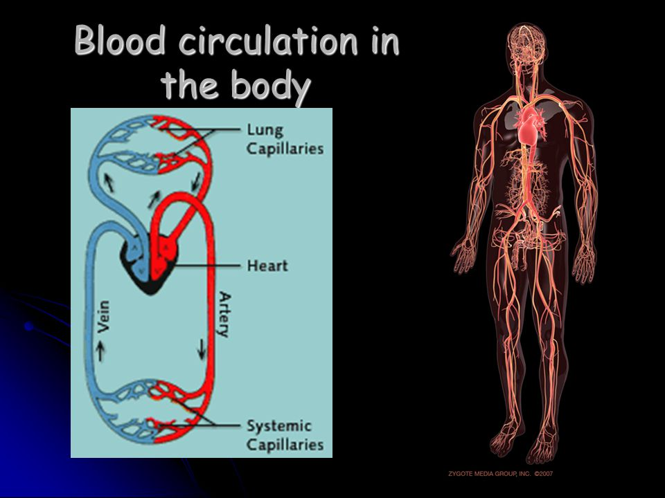 Coronary circulation The cells that make up the wall of the heart need a supply of blood.