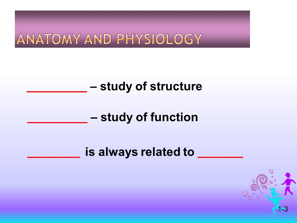 ________ – study of structure ________ – study of function _______ is always related to ______ 1-3