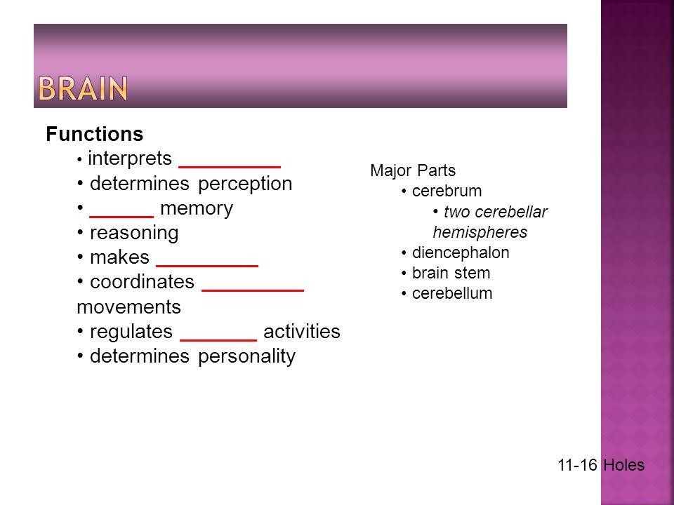Functions interprets ________ determines perception _____ memory reasoning makes ________ coordinates ________ movements regulates ______ activities determines personality Major Parts cerebrum two cerebellar hemispheres diencephalon brain stem cerebellum 11-16 Holes