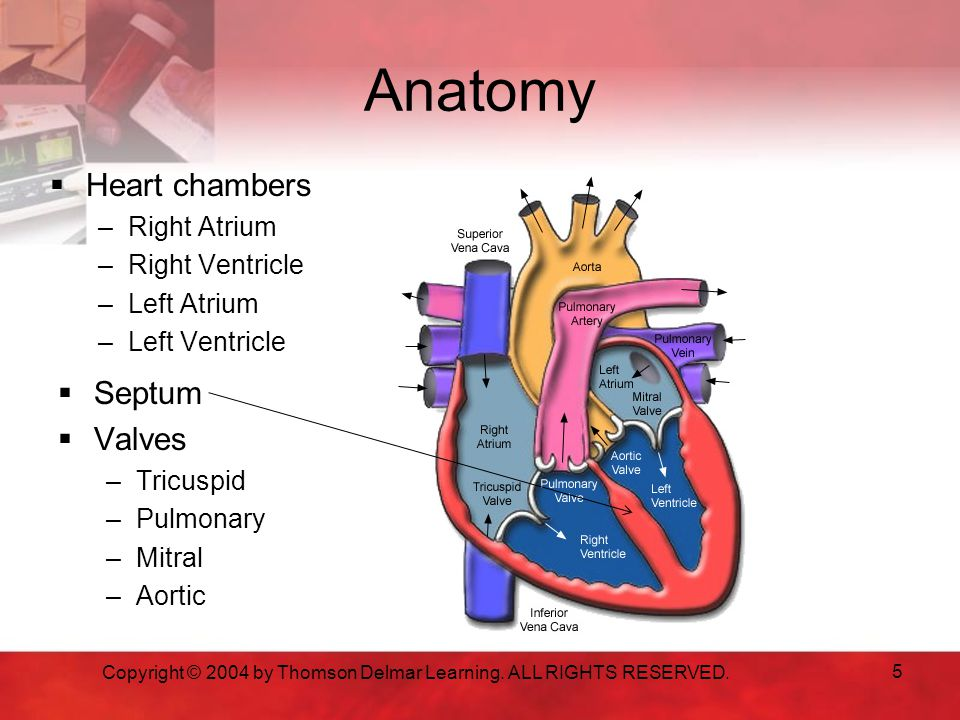 Anatomy  Heart chambers –Right Atrium –Right Ventricle –Left Atrium –Left Ventricle  Septum  Valves –Tricuspid –Pulmonary –Mitral –Aortic Copyright © 2004 by Thomson Delmar Learning.