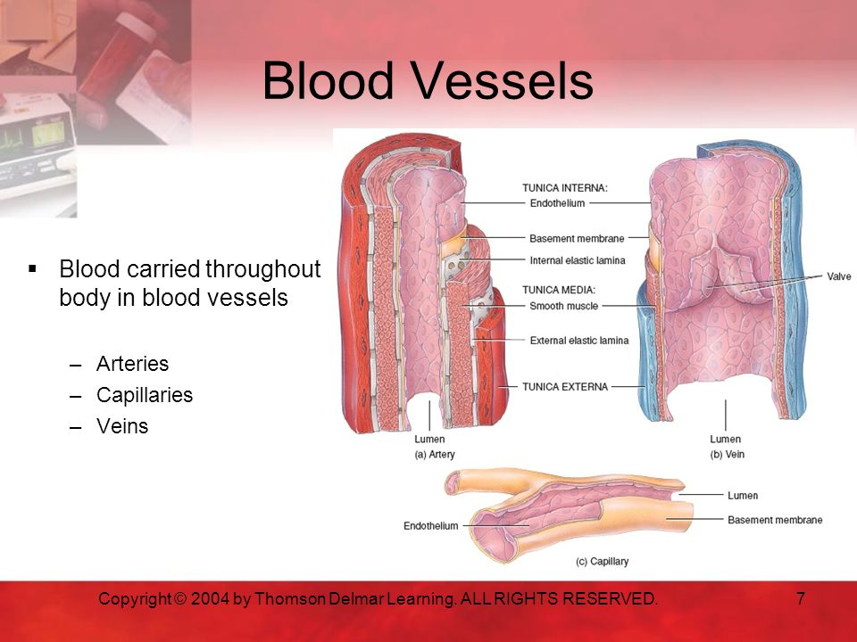 7 Blood Vessels  Blood carried throughout body in blood vessels –Arteries –Capillaries –Veins