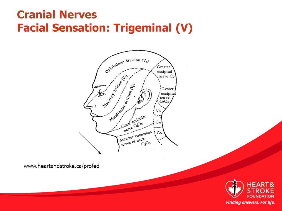 Cranial Nerves Facial Sensation: Trigeminal (V) www.heartandstroke.ca/profed