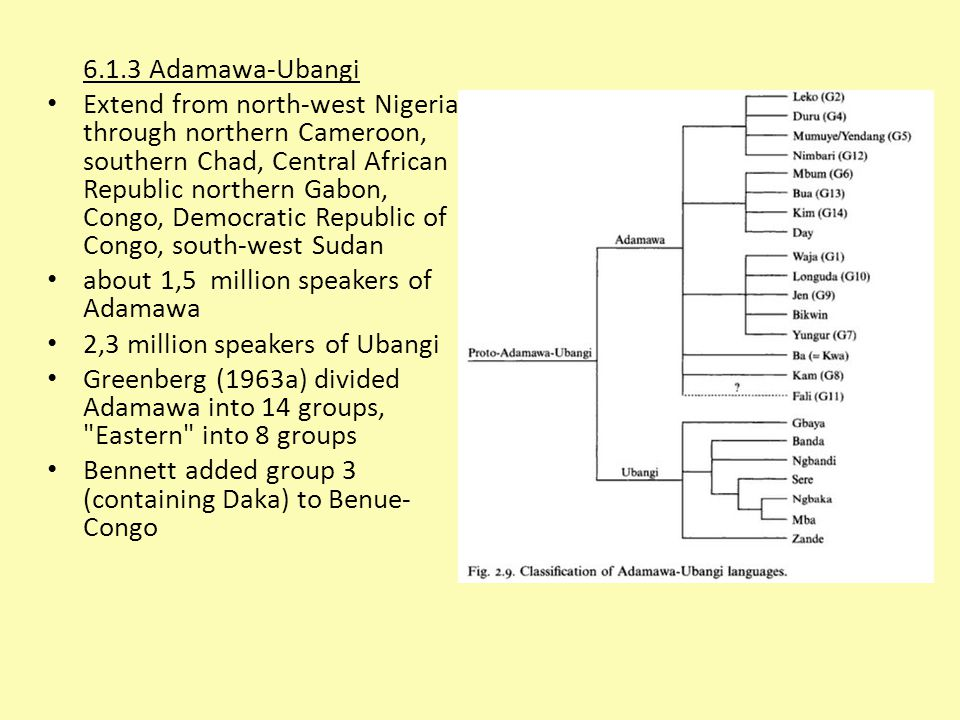 6.1.3 Adamawa-Ubangi Extend from north-west Nigeria through northern Cameroon, southern Chad, Central African Republic northern Gabon, Congo, Democratic Republic of Congo, south-west Sudan about 1,5 million speakers of Adamawa 2,3 million speakers of Ubangi Greenberg (1963a) divided Adamawa into 14 groups, Eastern into 8 groups Bennett added group 3 (containing Daka) to Benue- Congo