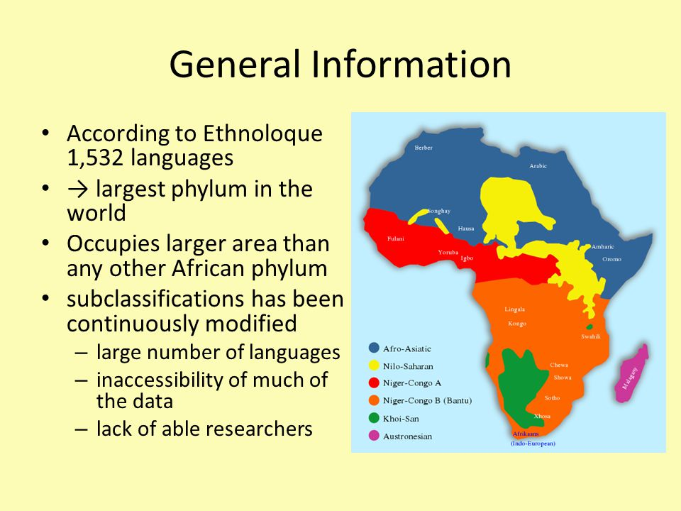 According to Ethnoloque 1,532 languages → largest phylum in the world Occupies larger area than any other African phylum subclassifications has been continuously modified – large number of languages – inaccessibility of much of the data – lack of able researchers General Information