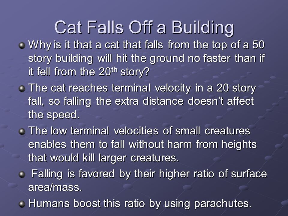 Cat Falls Off a Building Why is it that a cat that falls from the top of a 50 story building will hit the ground no faster than if it fell from the 20