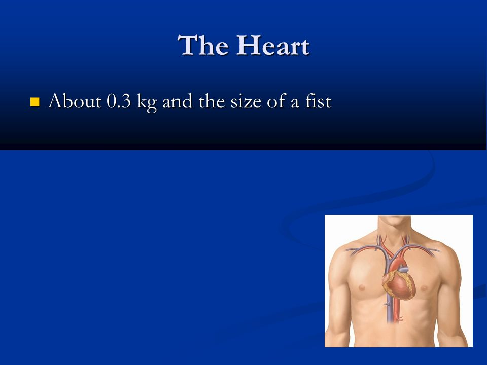 The Heart About 0.3 kg and the size of a fist About 0.3 kg and the size of a fist