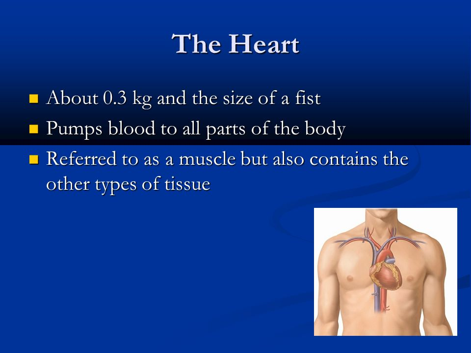 The Heart About 0.3 kg and the size of a fist About 0.3 kg and the size of a fist Pumps blood to all parts of the body Pumps blood to all parts of the body Referred to as a muscle but also contains the other types of tissue Referred to as a muscle but also contains the other types of tissue