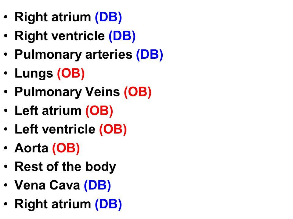 Right atrium (DB) Right ventricle (DB) Pulmonary arteries (DB) Lungs (OB) Pulmonary Veins (OB) Left atrium (OB) Left ventricle (OB) Aorta (OB) Rest of the body Vena Cava (DB) Right atrium (DB)