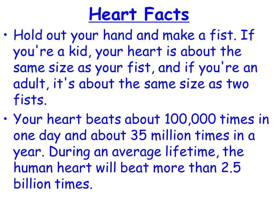 Heart Facts Hold out your hand and make a fist. If you're a kid, your heart is about the same size as your fist, and if you're an adult, it's about th