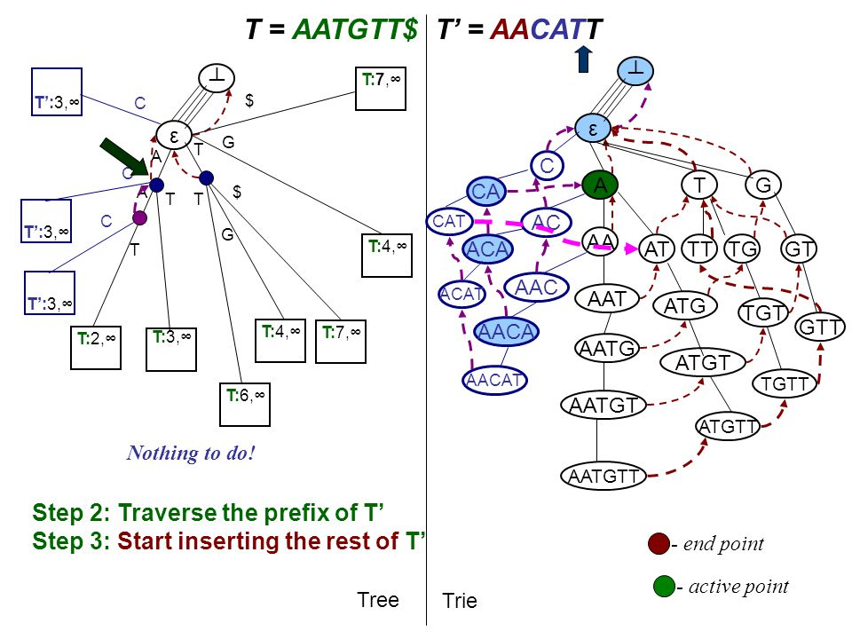T A T = AATGTT$T' = AACATT Tree Trie A AA AAT AATG AATGT AATGTT ε ┴ ε ┴ Step 2: Traverse the prefix of T' Step 3: Start inserting the rest of T' T AT ATG TG G ATGT TGT GT ATGTT TGTT GTT TT - active point T:2,∞ A T:3,∞ T:4,∞ T G T:6,∞ T G T:7,∞ $ $ AAC AC C T':3,∞ C T C C AACA ACA CA - end point AACAT ACAT CAT Nothing to do!