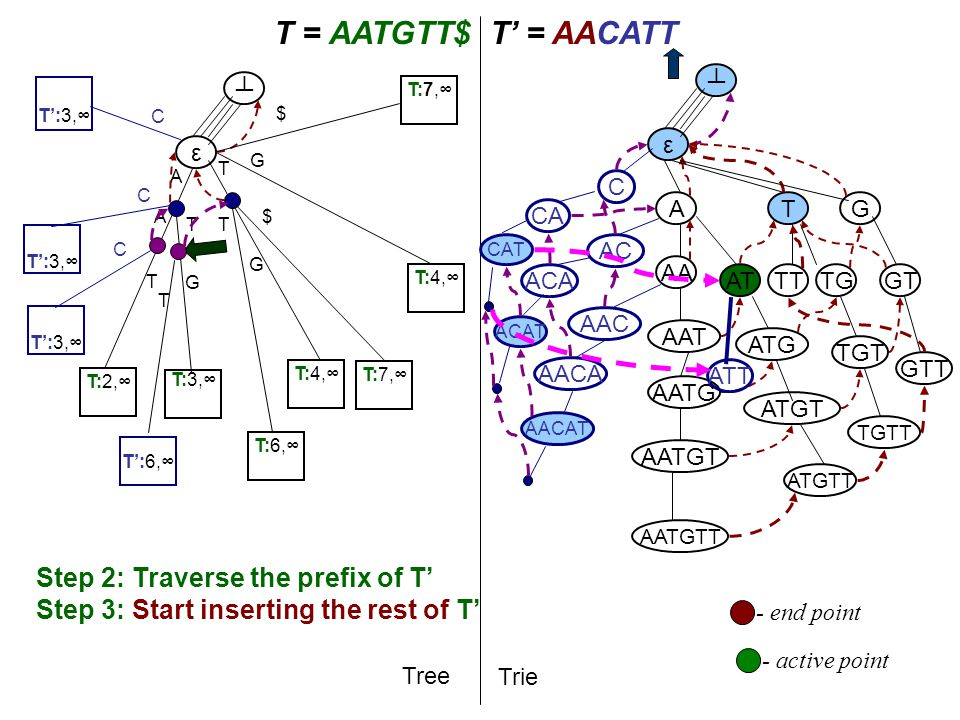 T A T = AATGTT$T' = AACATT Tree Trie A AA AAT AATG AATGT AATGTT ε ┴ ε ┴ Step 2: Traverse the prefix of T' Step 3: Start inserting the rest of T' T AT ATG TG G ATGT TGT GT ATGTT TGTT GTT TT - active point T:2,∞ A T:3,∞ T:4,∞ T G T:6,∞ T G T:7,∞ $ $ AAC AC C T':3,∞ C T C C AACA ACA CA - end point AACAT ACAT CAT ATT G T':6,∞ T