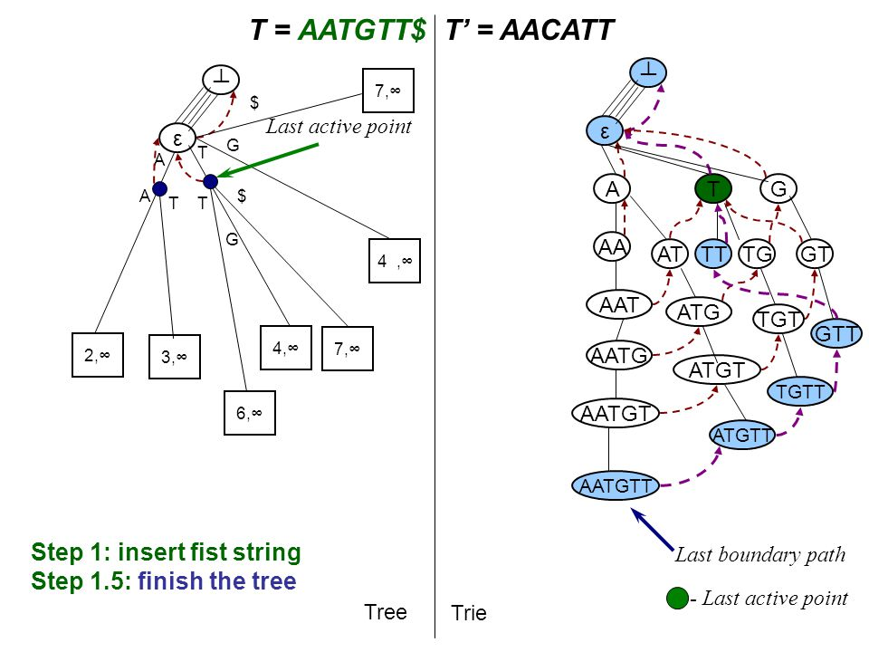 T A T = AATGTT$T' = AACATT Tree Trie A AA AAT AATG AATGT AATGTT ε ┴ ε ┴ Step 1: insert fist string Step 1.5: finish the tree T AT ATG TG G ATGT TGT GT ATGTT TGTT GTT TT Last boundary path - Last active point 2,∞ A 3,∞ 4,∞ T G 6,∞ T G Last active point 7,∞ $ $