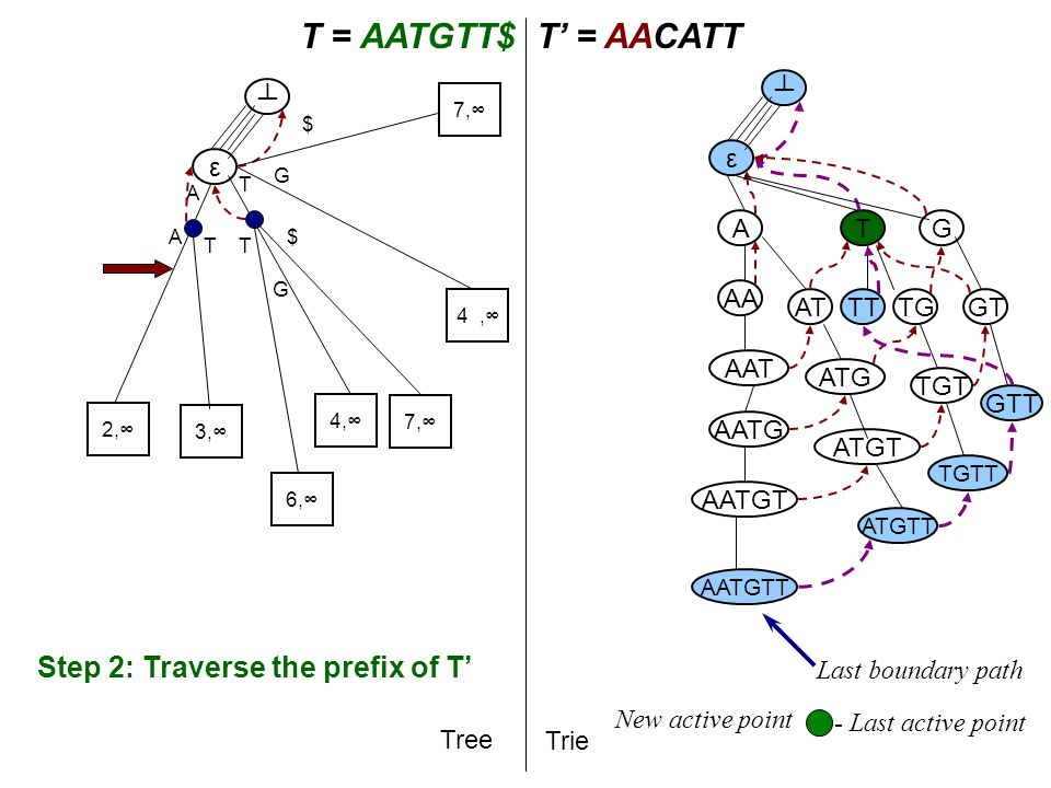 T A T = AATGTT$T' = AACATT Tree Trie A AA AAT AATG AATGT AATGTT ε ┴ ε ┴ Step 2: Traverse the prefix of T' T AT ATG TG G ATGT TGT GT ATGTT TGTT GTT TT Last boundary path - Last active point 2,∞ A 3,∞ 4,∞ T G 6,∞ T G 7,∞ $ $ New active point