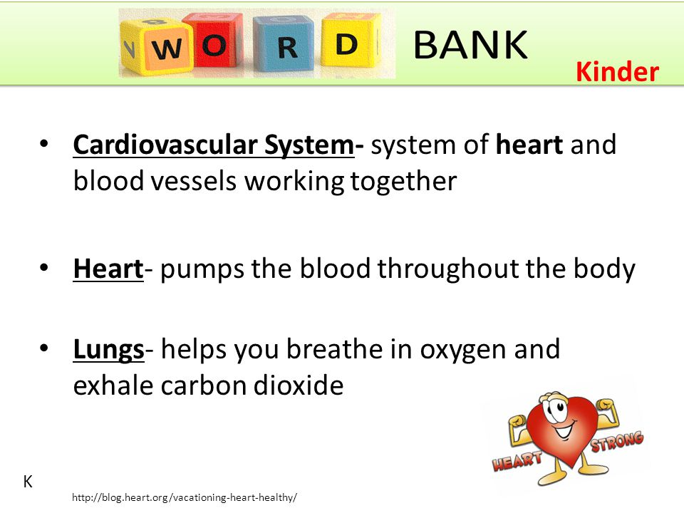 Carbon Dioxide- a gas that the blood brings from the body to the lungs for you to exhale Arteries- carries blood away from the heart Veins- carries blood toward the heart Asthma- a condition that keeps people from breathing well 1 http://t1.gstatic.com/images?q=tbn:ANd9GcS3oqLkC6O8iDLjjOL5Dnd8vT7d4OKzGqGziAAwtINNituh0iXYXA 1 st Grade
