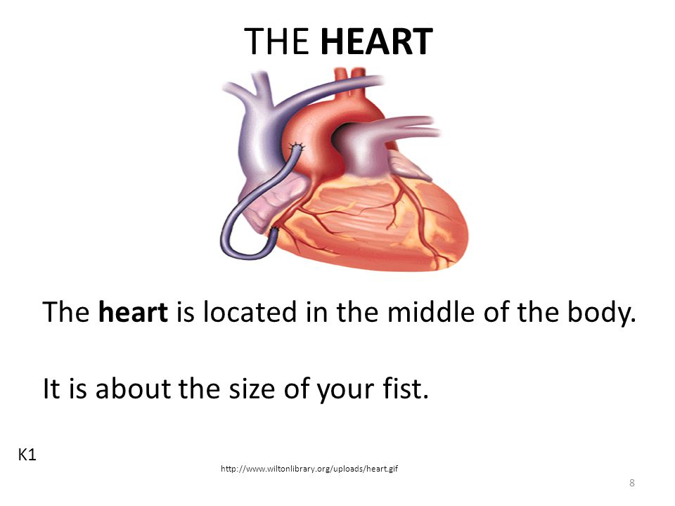 Cardiovascular Review How does playing a tag game affect your heart and lungs.