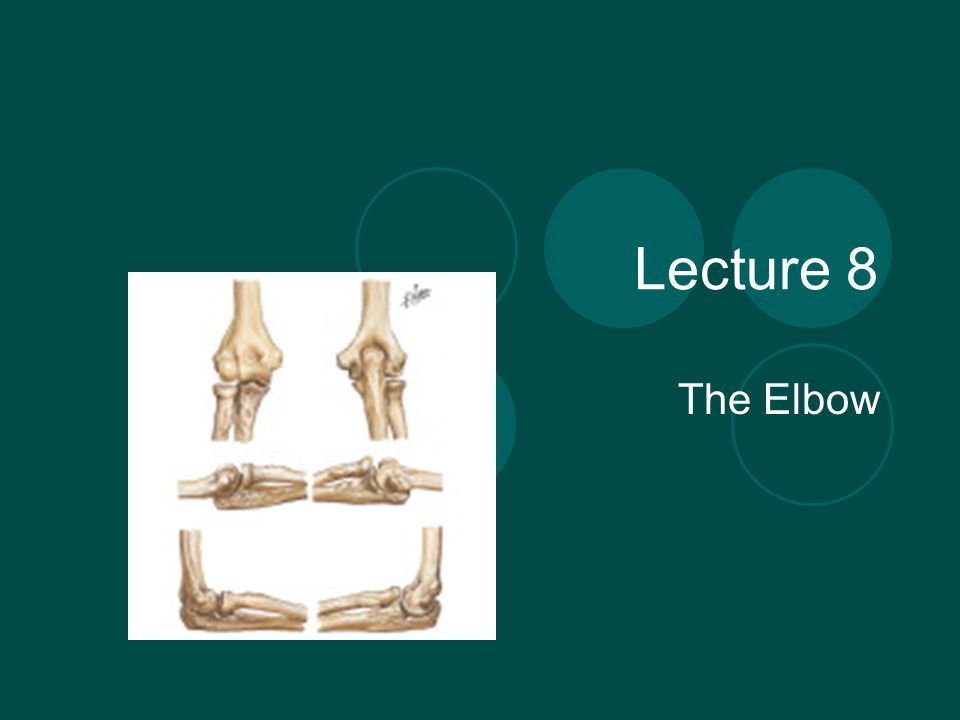 Lecture 8 The Elbow