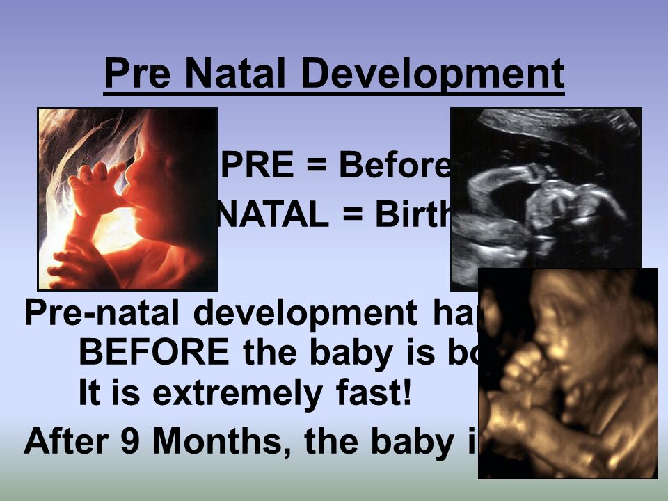 Pre Natal Development PRE = Before NATAL = Birth Pre-natal development happens BEFORE the baby is born.