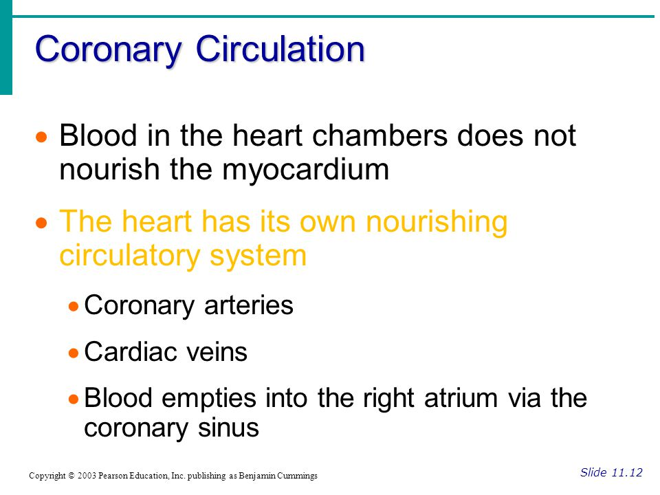 Coronary Circulation Slide 11.12 Copyright © 2003 Pearson Education, Inc.