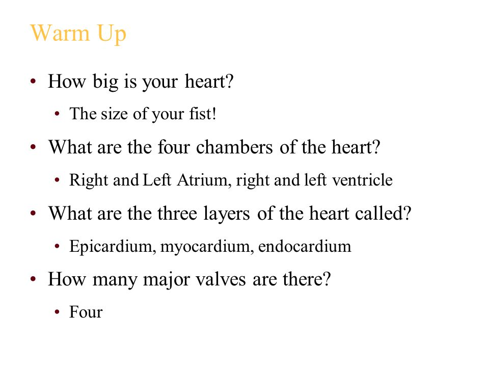 Warm Up How big is your heart.The size of your fist.