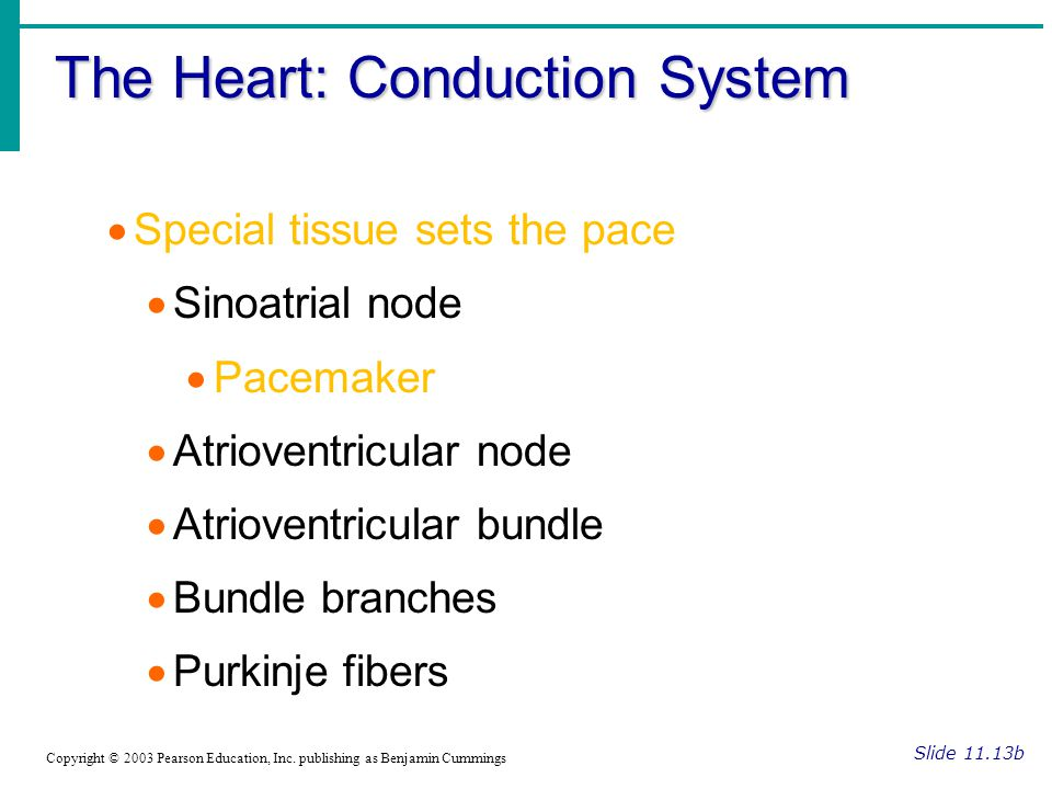 The Heart: Conduction System Slide 11.13b Copyright © 2003 Pearson Education, Inc.