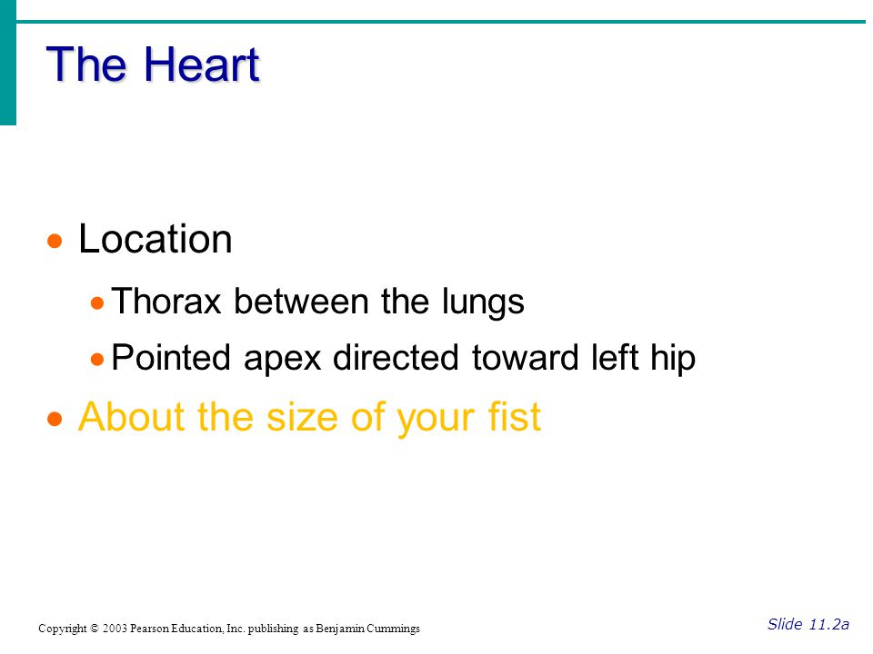 The Heart Slide 11.2a Copyright © 2003 Pearson Education, Inc.