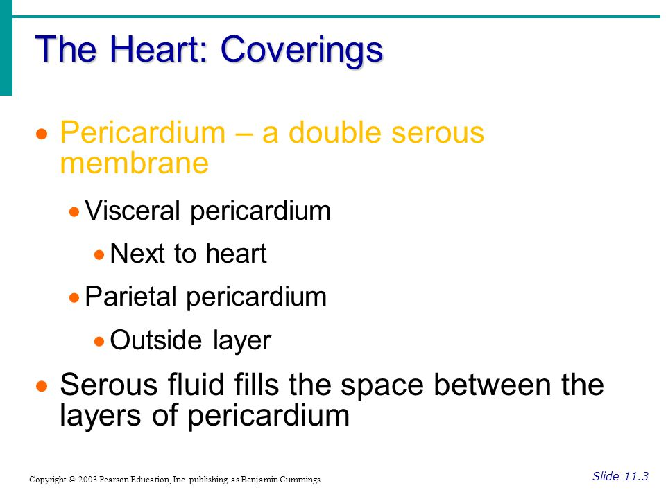 The Heart: Coverings Slide 11.3 Copyright © 2003 Pearson Education, Inc.